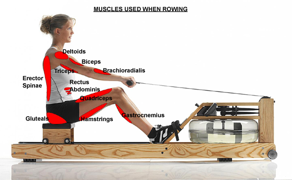 Rowing is an amazing full body workout